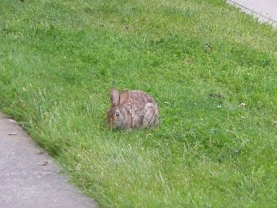 Saw a bunny on our walk.