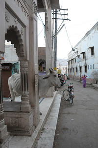 The town of Pushkar is located 14 km North West of Ajmer. Pushkar is one of the oldest cities of India. It  has in recent years become a popular destination for foreign tourists. Pushkar, Rajasthan, India.
