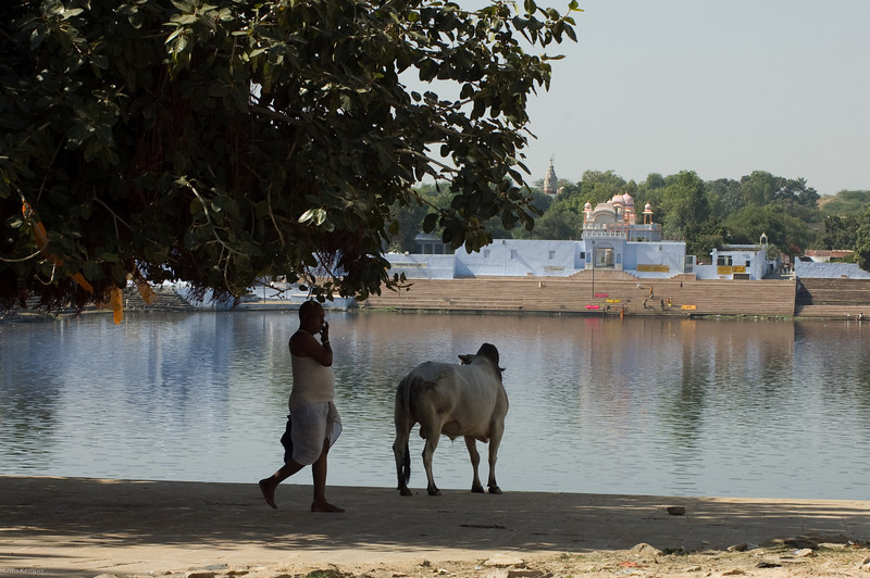 Pushkar-1