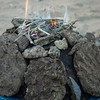 Dung Fire To Be<br /> Pushkar, India
