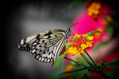 #Papillons2015
