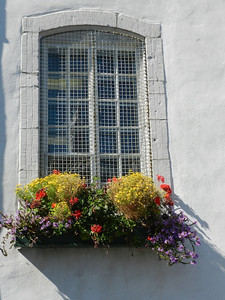 Flowers in the window boxes
