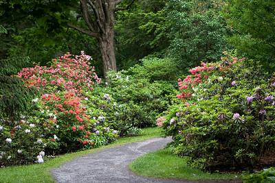 Parc du Bois de Couonge, Rhododendron Garden