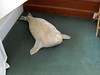 The hotel and the rooms have local art everywhere. This was our pet seal in the corner of our room.