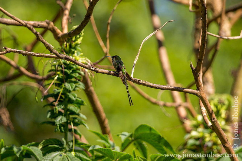 Quito. La Carolina Park: Hummingbird