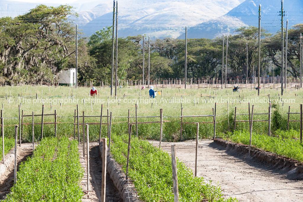 Equador-Quito-Hacienda Verde-04504-2