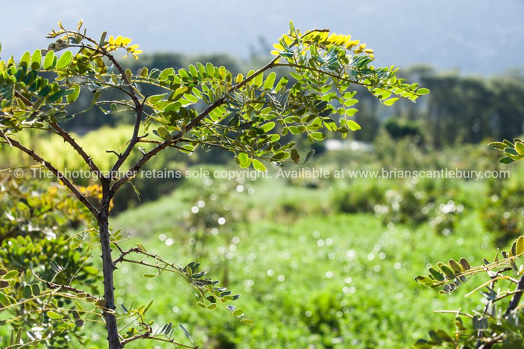 Equador-Quito-Hacienda Verde-04510-2