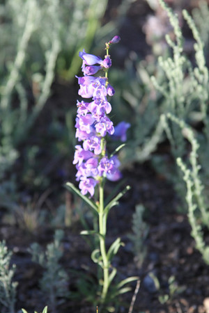 RMNP2010::Flora