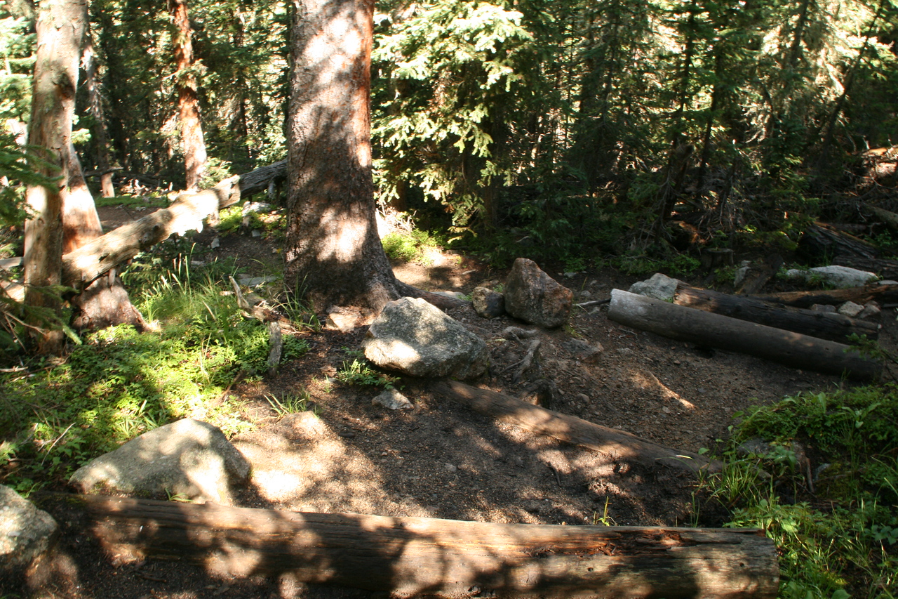 """A very steep hill going down to Finch Lake.  Trees were cut and used for a kind of step.  The trail turned sharply to the left after the """"stairs""""."""