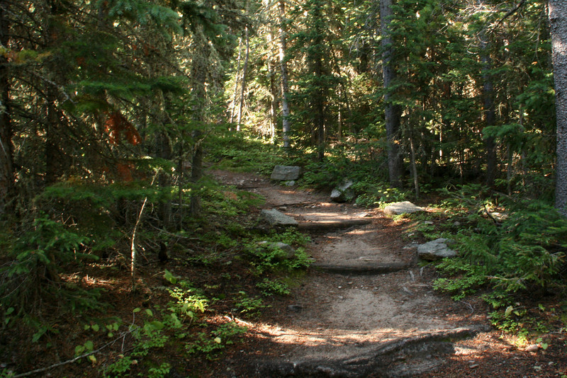 A nice meandering trail thru the woods.