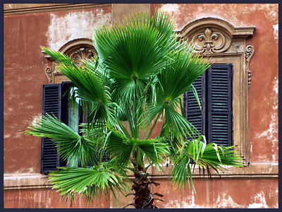 PalmTree,Rome