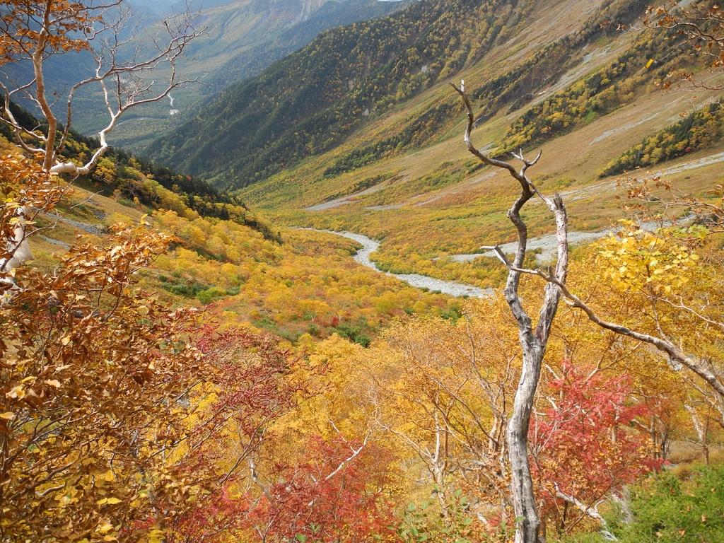 Beautiful autumn colour in the North Alps.