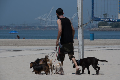 5 Dogs Dog Walker