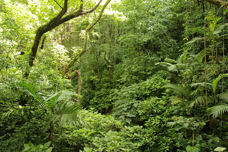 ...as we climbed to the canopy of the rain forest.