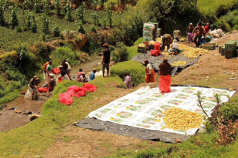 In route to Antigua we came upon this group of people preparing potatoes for market.