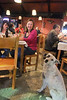 This dog was patiently begging for some food scraps from these vacationing schoolteachers.  They said he turned his nose up at the fish they offered him, preferring the steak he had been given earlier. Apparently a dog who knows what he likes!