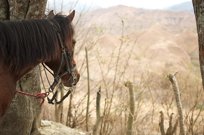 Vilcabamba - Horse Riding 13
