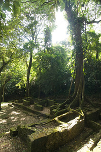 Palenque 87
