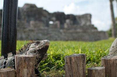 Tulum Ruins 39