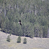 My favorite bald eagle shot