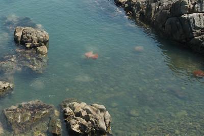 Busan - Haeundae 12 - Giant Jellyfish