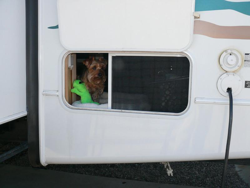 Happy doggie in her den.