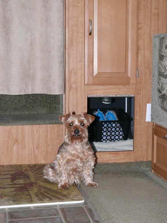 Our dog beside her doggie den entry.