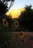 Sunrise at our campsite.