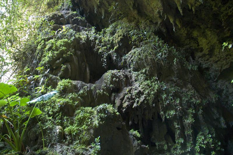 Las cuevas de Camuy