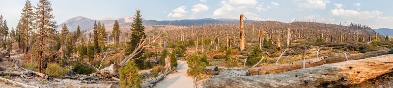 A panorama of the devastation from the 1992 fire