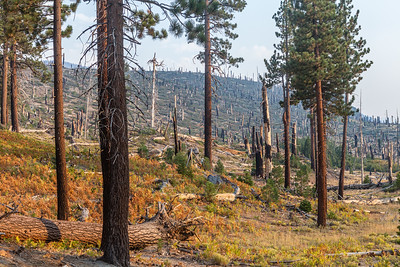 On the trail to Rainbow Falls at Reds Meadows.  The signs of the 1992 fires still show clearly