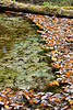 Mixture of Textures for the fish to hide in - Rainbow Springs State Park - Photo by Pat Bonish