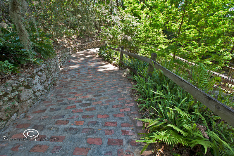 Pathways Lined with Ferns - Rainbow Springs State Park - Photo by Pat Bonish