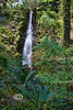Waterfall in Rainbow Springs State Park - photo by Pat Bonish