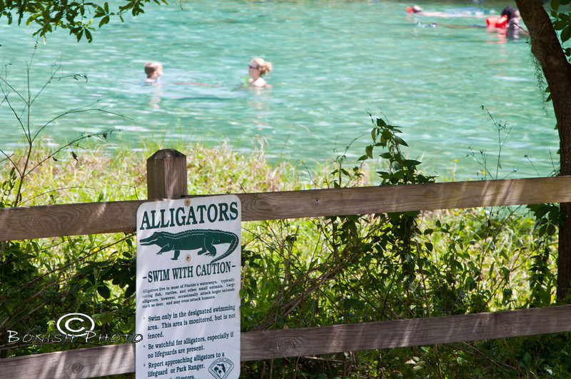 Sign warning the Alligators that there might be people in the water - Rainbow Springs State Park - Photo by Pat Bonish