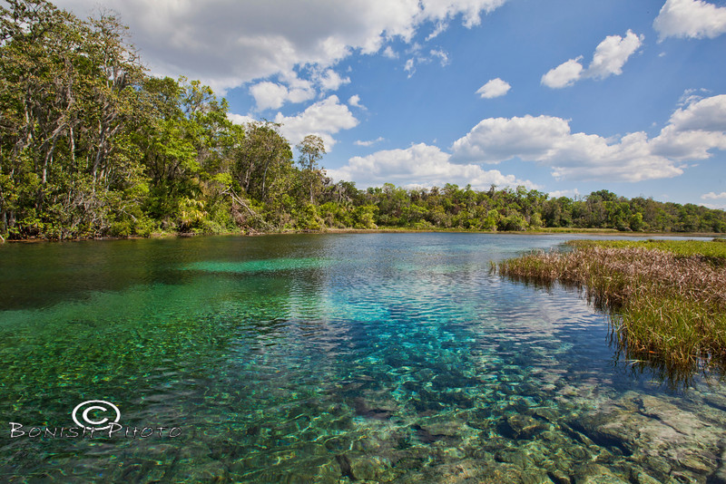 Looking down the Rainbow River - Crystal Clear water and blue skies - Rainbow Springs State Park - Photo by Pat Bonish