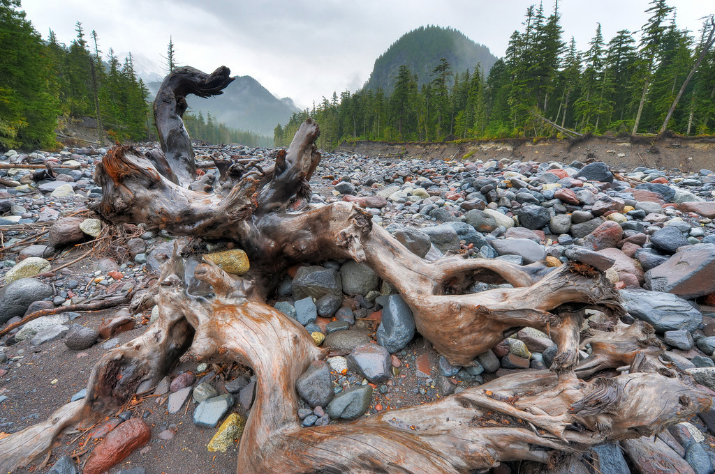 Weathered log in Nisqually River bed.