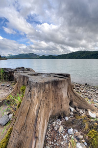 Log at Rocky Point