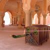 Palki at Jaipur Palace