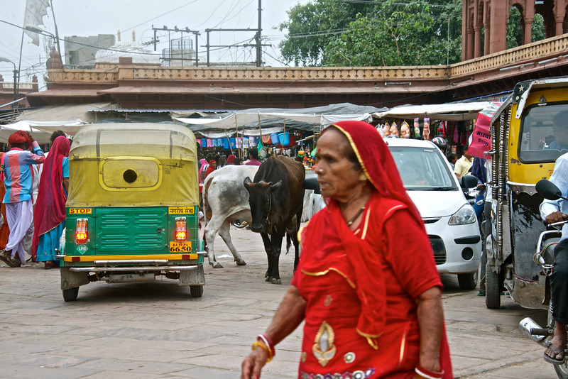 A typical street scene - people, auto rickshaws, cows, cars, bikes - Jodhpur