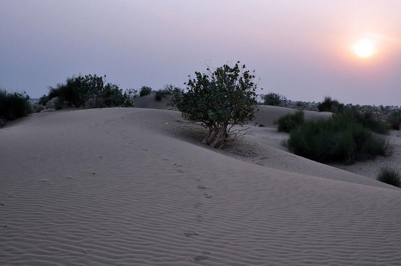 my footprints in the dunes