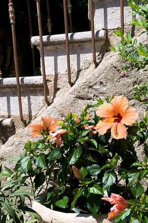Pretty steps lined with hibiscus.