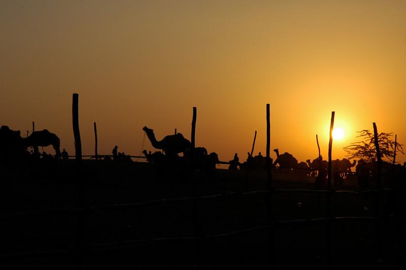 Pushkar Evening