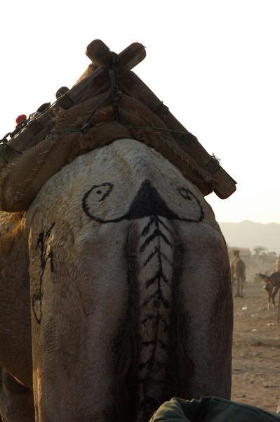 Rajasthani Mustache