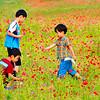 Field of Flowers, Gunsan