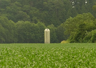 Silo and Corn Field