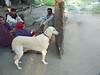 "Taken at Latitude/Longitude:23.283503/71.761422. 0.54 km West Zain?b?d Gujar?t India <a href=""http://www.geonames.org/maps/google_23.283503_71.761422.html""> (Map link)</a>"