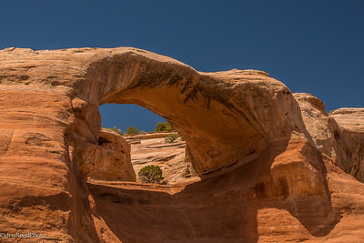 Cedar Tree Arch, also known as Rainbow Arch.