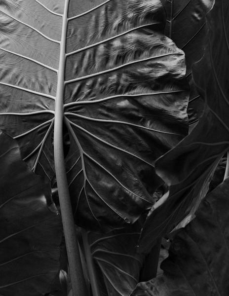 Elephant leaf #3