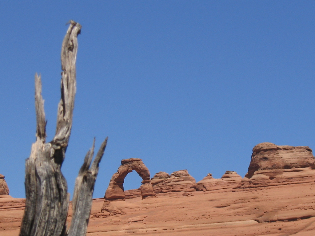 Tree and arch, Arches UT